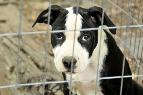 Dog, puppy, cute, little, sad, cage, big eyes